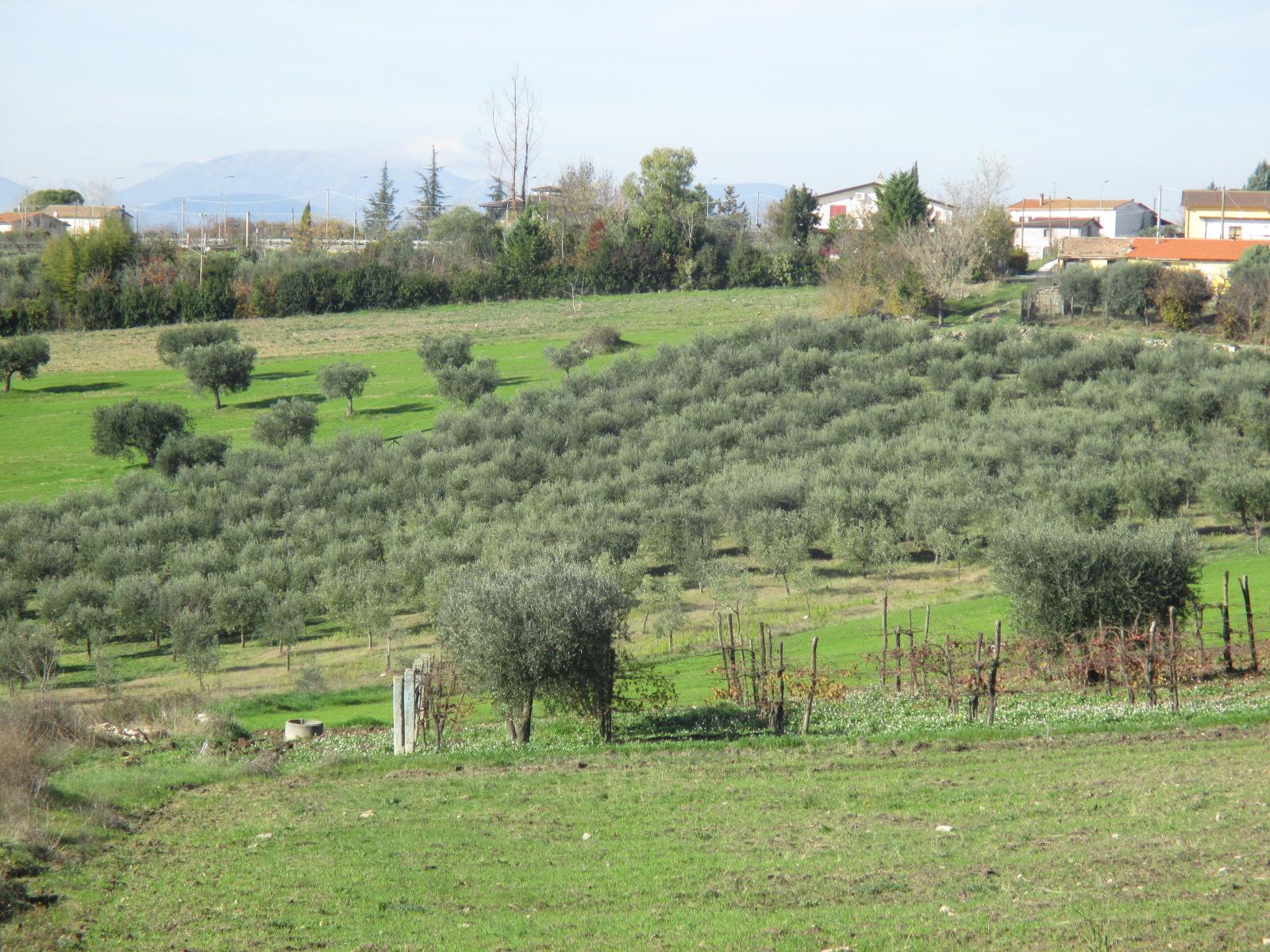 Terreno Agricolo